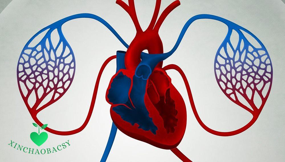 Tuần hoàn máu kém – Nguyên nhân, triệu chứng và cách điều trị